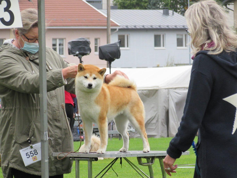 Tapahtumassa ensisijalla ovat koirat, joilla ei ole tulosta virallisista näyttelyluokista ja joille suunnitellaan jalostuskäyttöä. Kuva: Merete Lindgrén